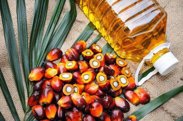 Trong dầu cọ có chứa nhiều dưỡng chất