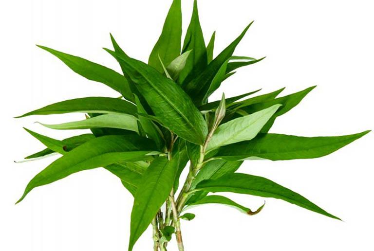 Lá rau răm giúp kháng khuẩn, tiêu viêm và giảm sưng tấy