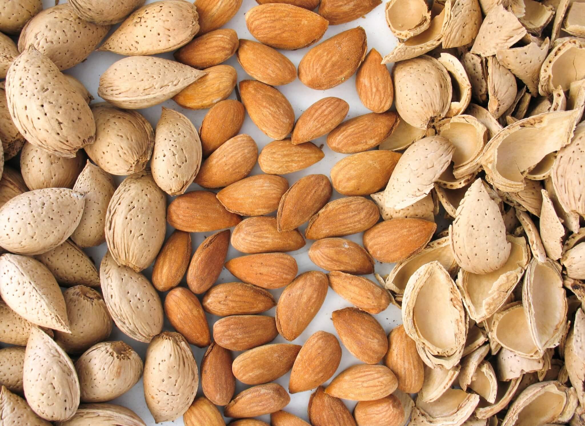 Hạnh nhân là loại hạt được sử dụng nhiều với tác dụng giảm mỡ bụng